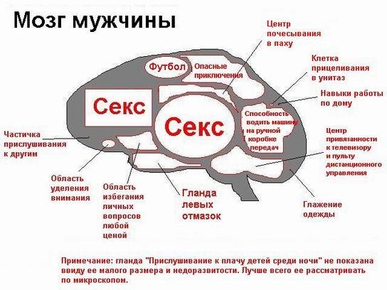 http://bacex.narod.ru/mozg-m.jpg