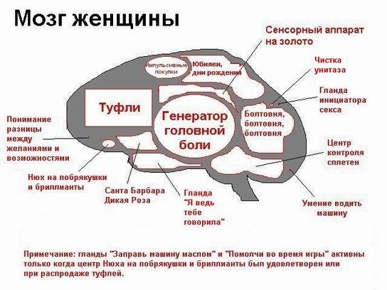 http://bacex.narod.ru/mozg-zh.jpg